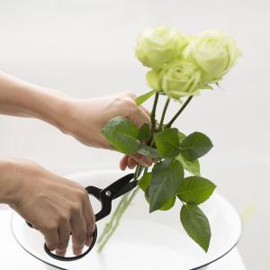 Kobayashi Seikyo Snoeischaar Florist